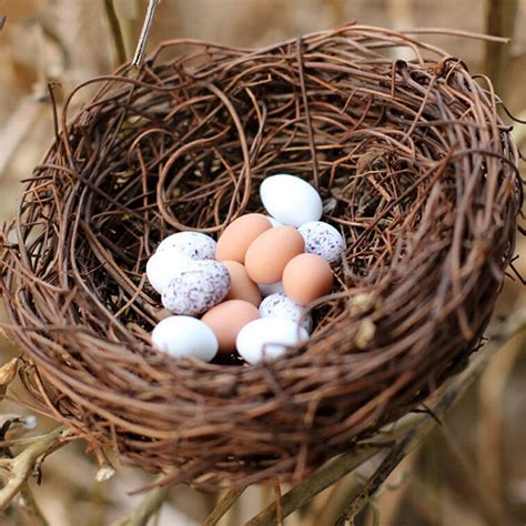 Diy Birds Nest Bedford