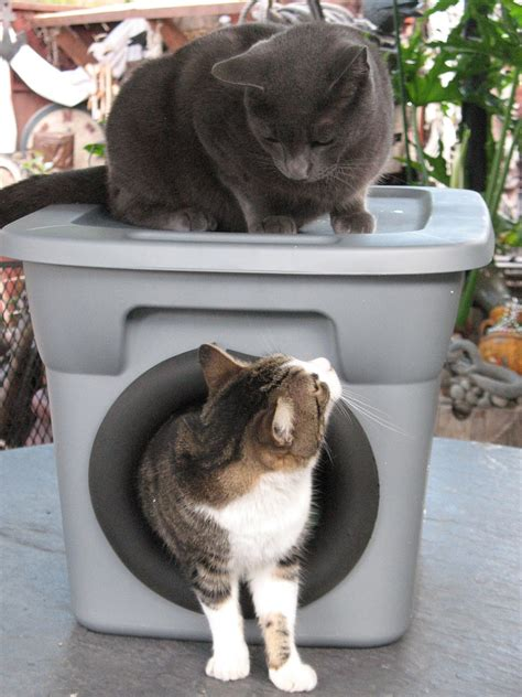 Diy Cat Bed For Outside Cats