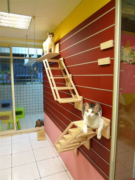 Diy Cat Climbing Wall Systems