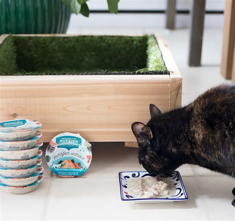 Diy Cat Grass Bed