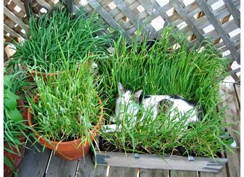 Diy Cat Grass Box