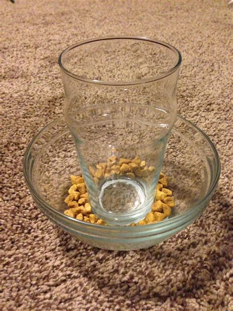 Diy Cat Slow Feeder Bowl