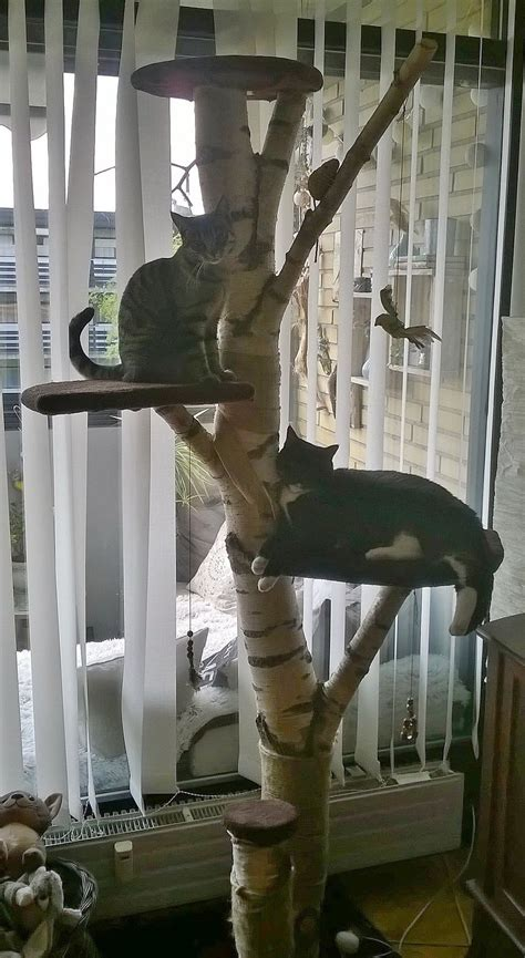Diy Cat Tree House From A Real Tree