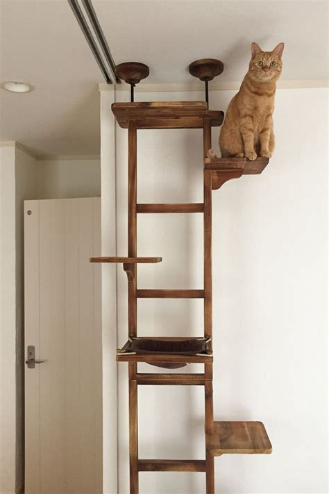 Diy Cat Tree Shelf Designs Crates