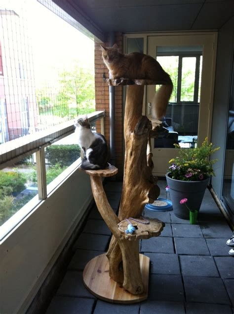 Diy Cat Tree Wood Beam Shelf