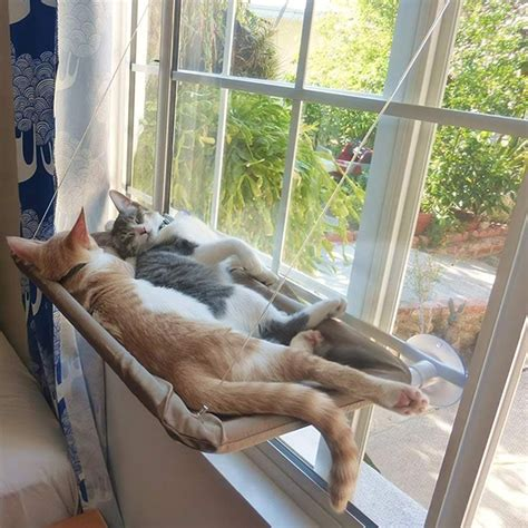 Diy Cat Window Bed Hammock