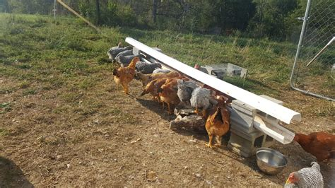 Diy Chicken Feeder Trough