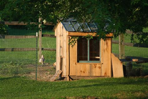 Diy Chicken Runs And Coops