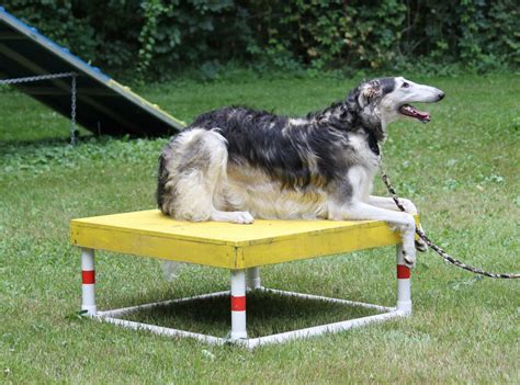 Diy Dog Agility Table