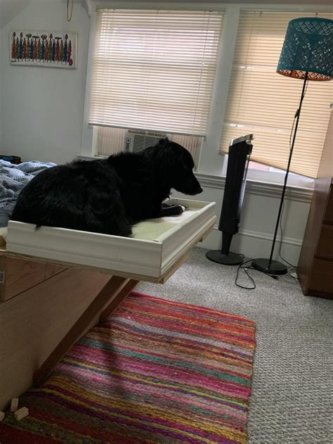 Diy Dog Bed Attached To Bed