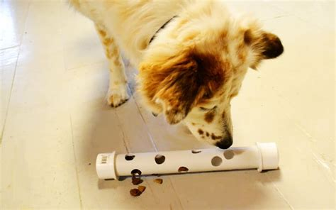 Diy Dog Feeder Toys