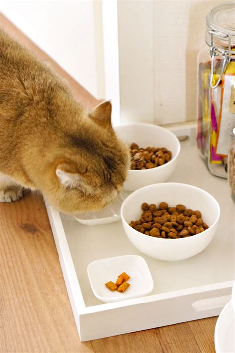 Diy Dog Food Tray