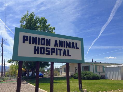 Diy Dog Grooming Table Reno Nv