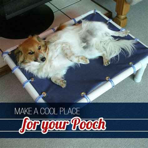 Diy Dog Stretcher Bed Rental