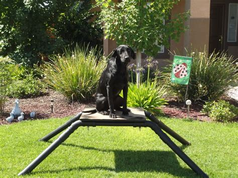 Diy Duck Hunting Dog Stand