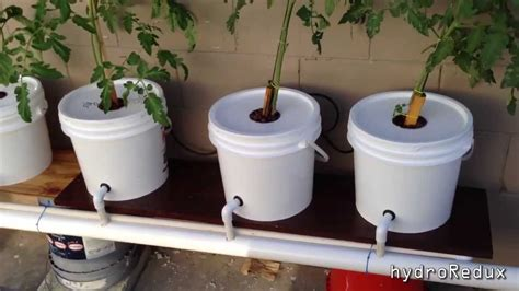 Diy Dutch Bucket Hydroponics