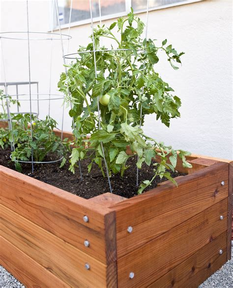 Diy Garden Boxes For Tomatoes