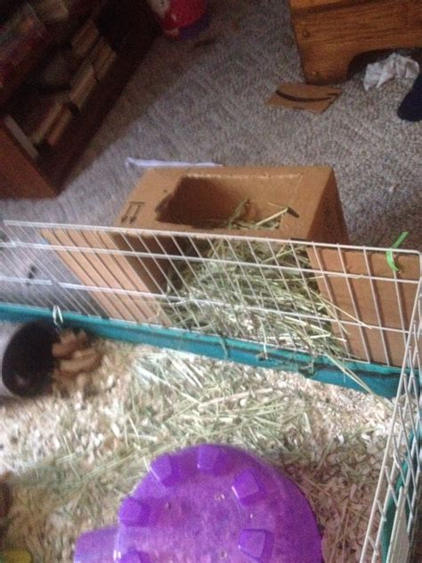 Diy Hay Feeder For Guinea Pigs
