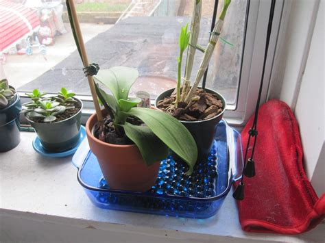 Diy Humidity Tray For Orchids