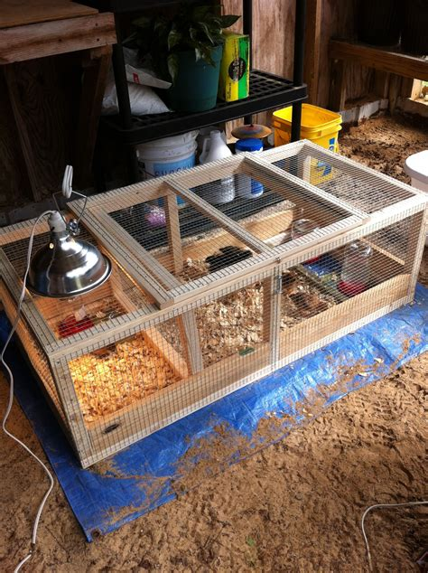 Diy Indoor Brooder Box Ideas