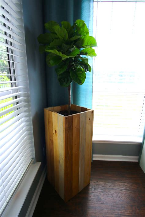 Diy Indoor Plants