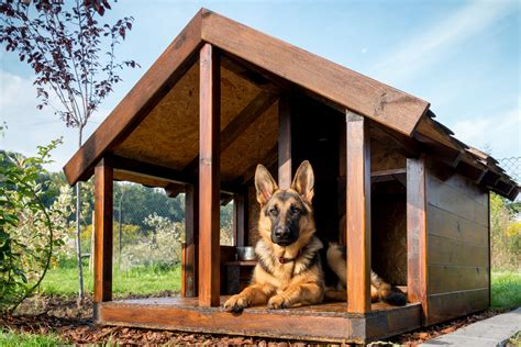 Diy Kennel Design