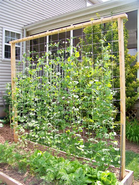 Diy Lattice Trellis For Peas