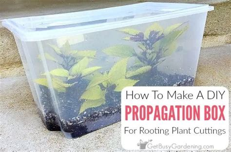 Diy Make Propagation Box For Trees