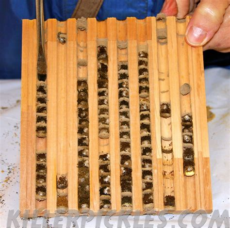 Diy Mason Bee House Wood Block