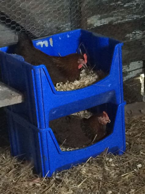 Diy Nesting Boxes Using Plastic Tub