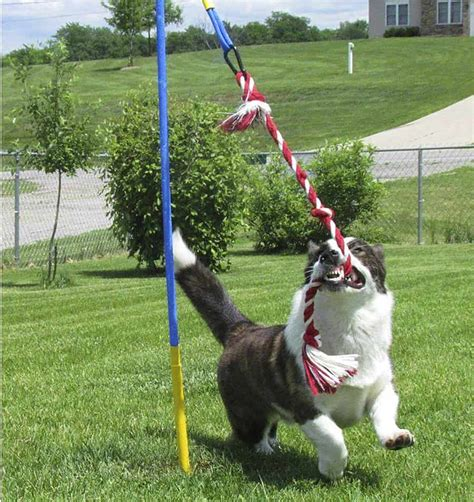 Diy Outside Toys For Dogs