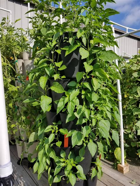 Diy Plant Bell Pepper Plants