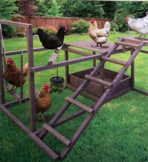 Diy Play Structures Backyard Chickens