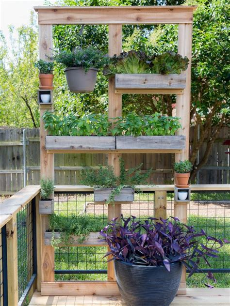 Diy Privacy Screen Using Plants