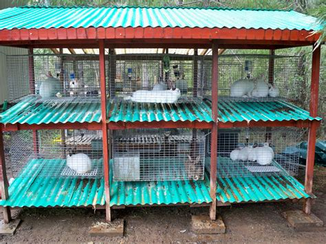 Diy Rabbit Cage Stand Dimensions