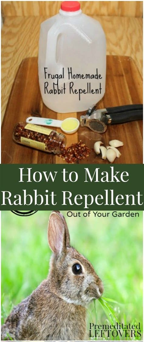 Diy Rabbit Control