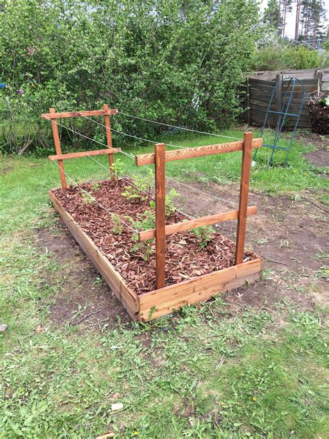 Diy Raised Bed Trellis For Raspberries