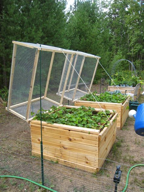 Diy Raised Strawberry Bed Plans