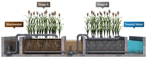Diy Reed Bed Construction Design