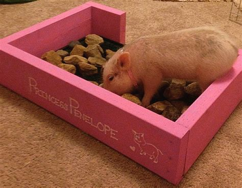 Diy Rooting Box Pig