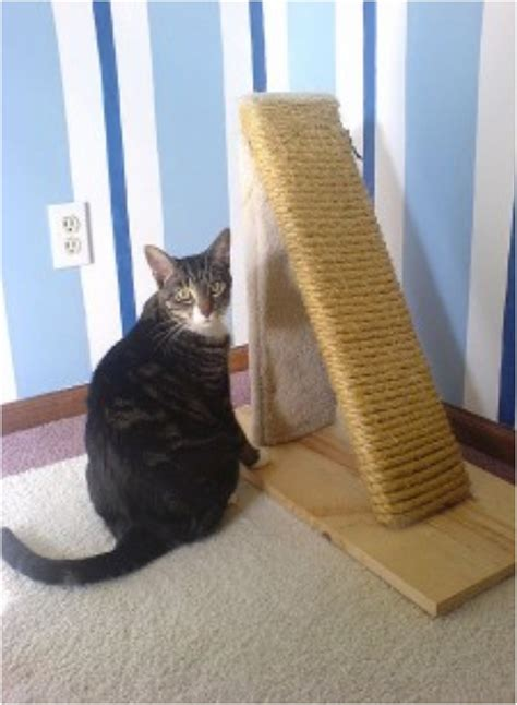 Diy Tall Cat Scratch Post