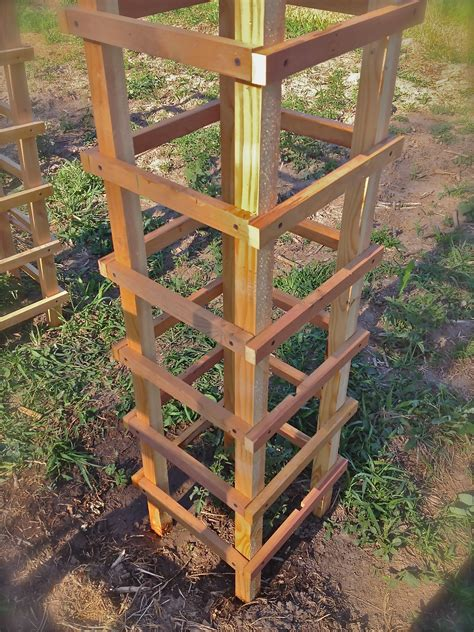 Diy Tomato Cage Tree Wood