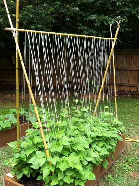 Diy Trellis For Cucumbers