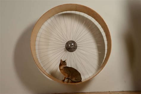Diy Wall Mounted Cat Wheel