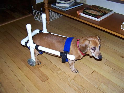 Diy Wheelchair Cart For Dog