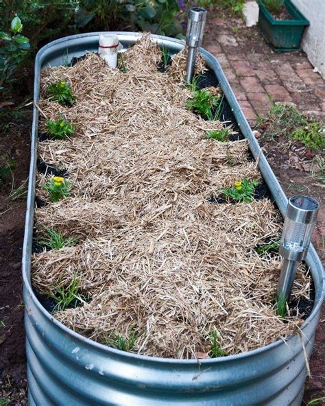 Diy Wicking Bed 2x8