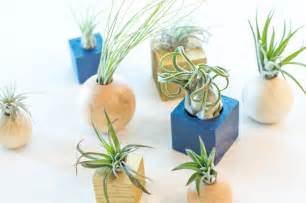 Diy Wood Air Plant Holder