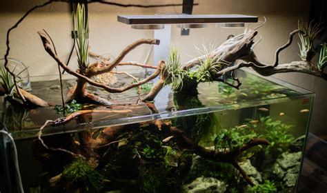 Diy Wood Aquarium Plants