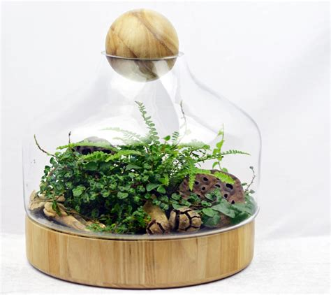 Diy Wood Base Terrariums