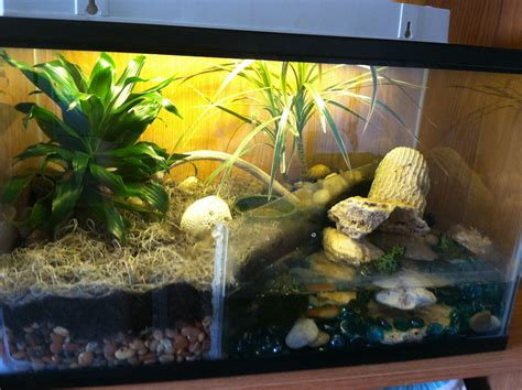 Diy Wood Frogs Habitat